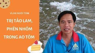 Vlog Nuôi Tôm: Giải Đáp Thắc Mắc - Cách Trị Tảo Lam, Phèn Nhôm và Xử lý Chlorine Trong Ao Tôm