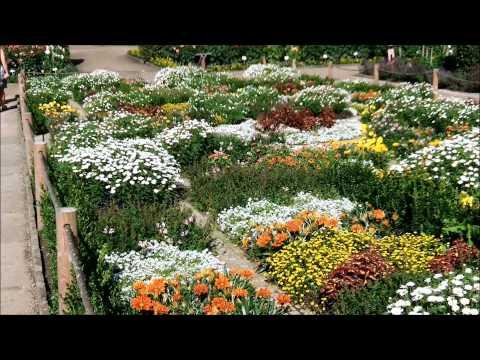 Blumen, Sonne Und Ein Wenig Wasser