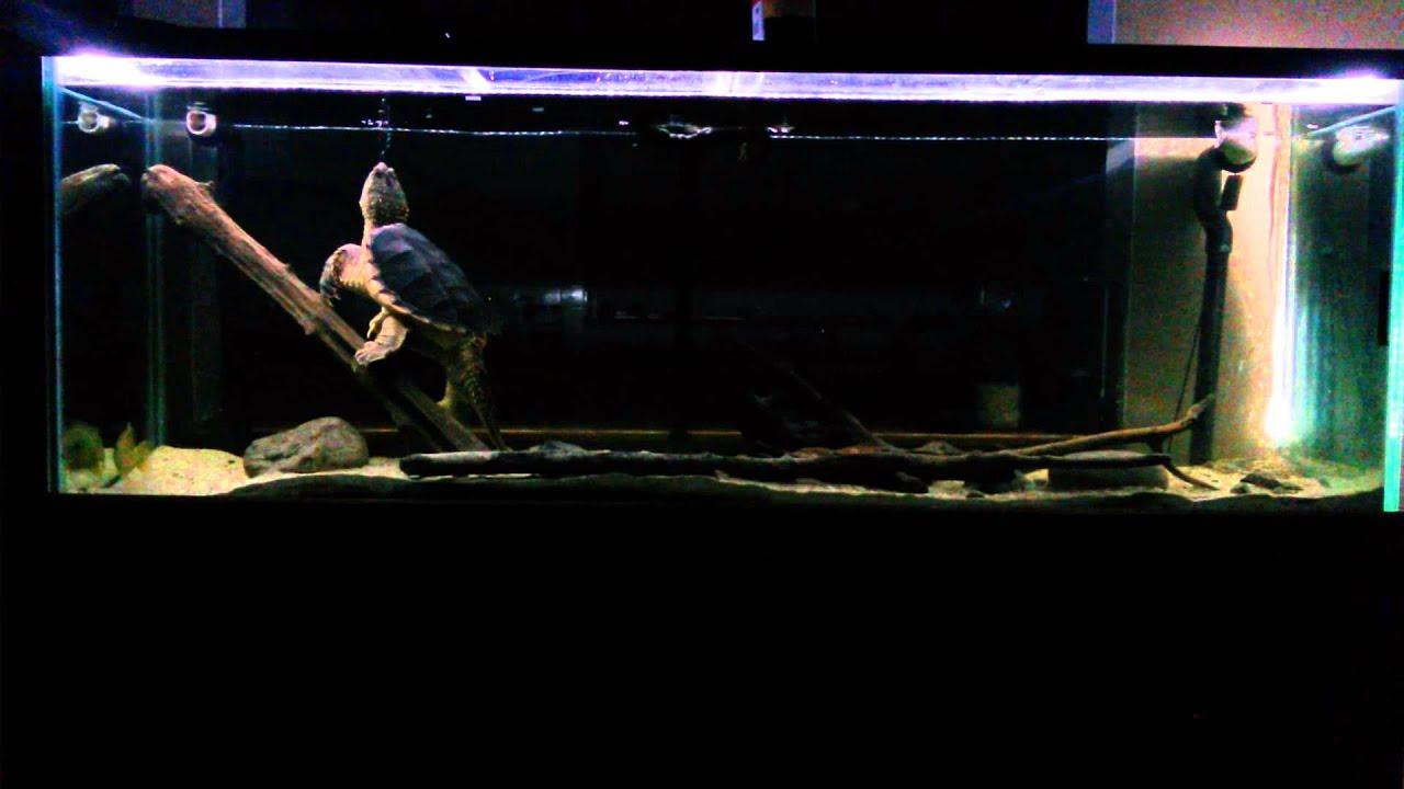 150 Gallon Snapping Turtle Tank Setup Youtube