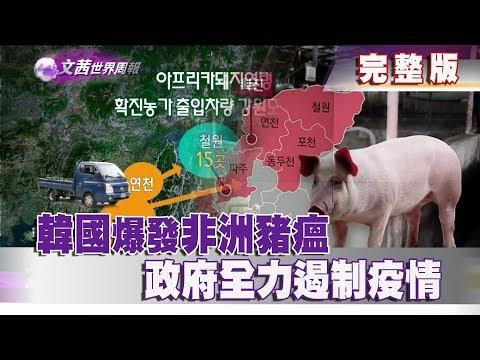 台灣-文茜世界周報-20190921 韓國爆發非洲豬瘟 政府全力遏制疫情
