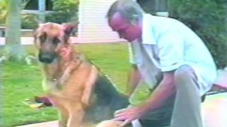 San Diego Police Dog Back In Service Thanks To Chiropractor