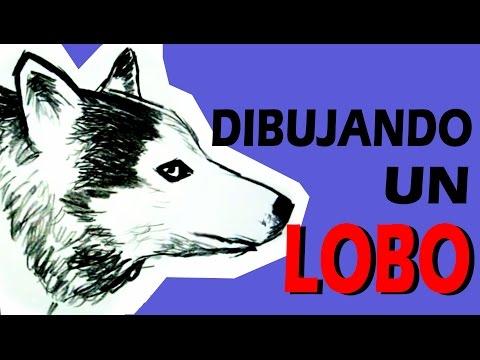 DIBUJANDO A UN LOBO DRAWING A WOLF