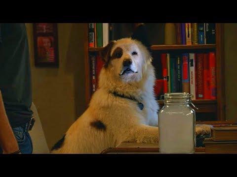 Собака точка ком (Сезон 3 Серия 21)