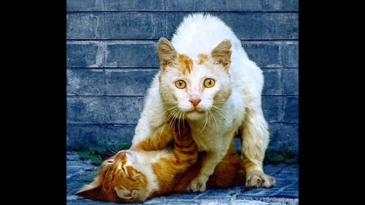 Секс мартовские кошки 1 фотография