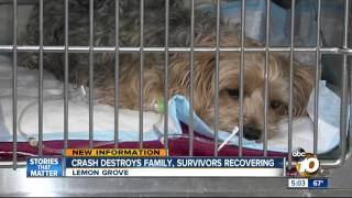 Survivors recovering after Lemon Grove crash kills 3 people, 2 dogs