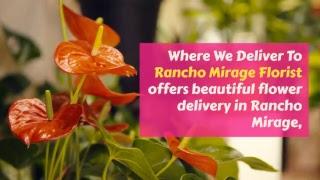 Flower Shop Salvia