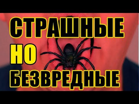 ТОП 5 Неопасных существ, которых мы боимся