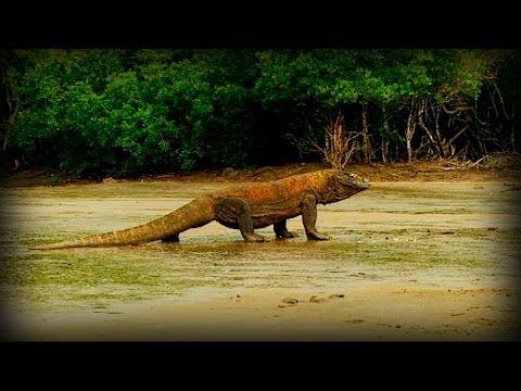 Komodo And Sumatra Land Of Dragons Full Doentary