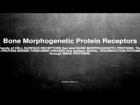 Medical vocabulary: What does Bone Morphogenetic Protein Receptors mean