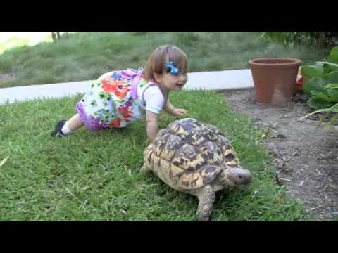 The charming friendship between an 11-month old and an African Leopard Tortoise. An important reminder that friends can come in all different shapes and sizes.