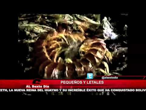 Pequeños, pero letales: los insectos más peligrosos del planeta