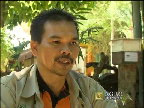 Rtm  Agro Journal Madu Kelulut Min House Camp  Part1 2