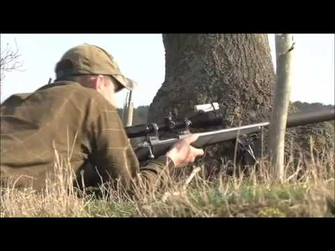 Chinese water deer stalking in Bedfordshire