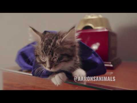 When Cats Make Movies