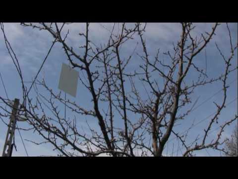 Az őszibarackfa levéltetű elleni védelme