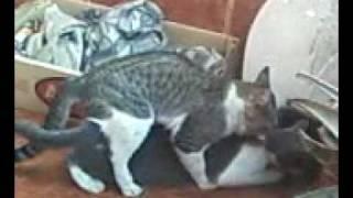 gato xxx