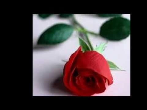 Bunga Mawar-Novia Kolopaking.mp4