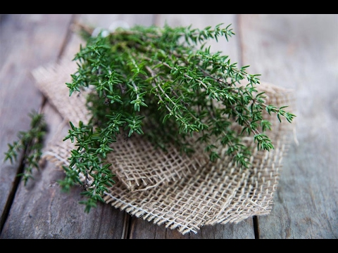 فوائد طبيعية وعلاجية لشاى الزعتر الرائع لن تتخيل فوائدة العجيبة thumbnail