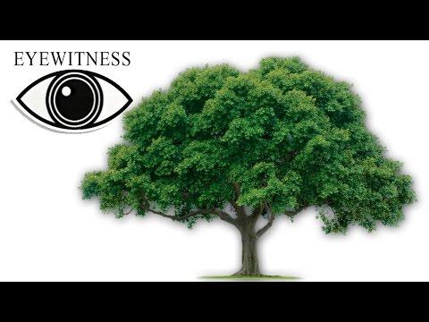Все Про Деревья | BBC Документальный Фильм | Eyewitness | Tree