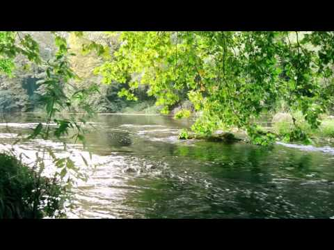 FOREST CREEK Nature Sounds | 8 Hours (For stress relief, relaxation & sleeping)