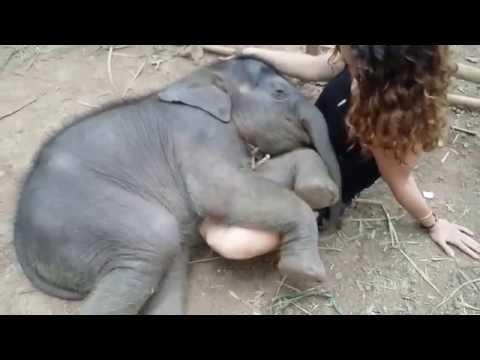 女性の膝枕でぐっすり熟睡する象の赤ちゃん