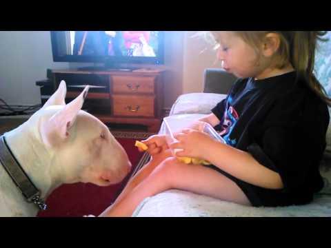 #BestFriendsForever-Girl Feeds English Bull Terrier