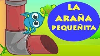 🎶 INCY WINCY ARAÑA PEQUEÑITA 🎶 Itsy Bitsy Spider Español | Canciones Infantiles | Dibujos en Español