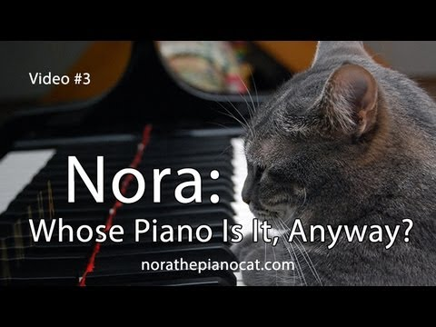 Nora The Piano Cat: Whose Piano Is It, Anyway?