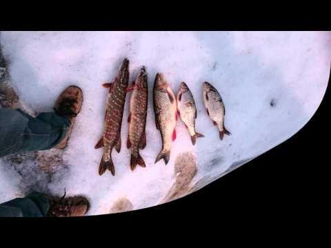 рыбалка плотвы зимой на малых реках видео