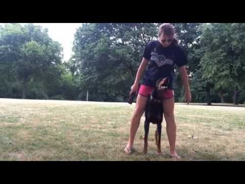 Amazing Doberman Tricks!