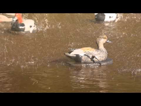 GADWALL DRAKE with - 5 Sec ON/OFF TIMER