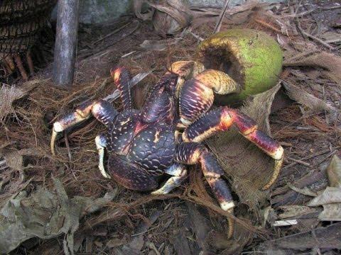 British Indian Ocean Territory - wildlife and heritage