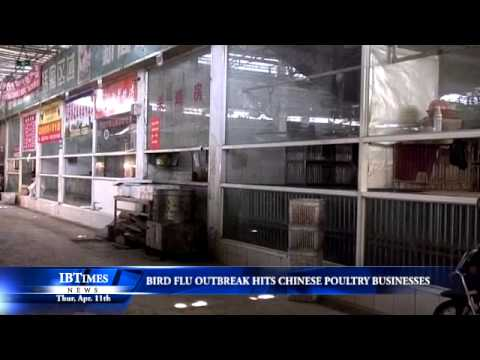 Bird Flu Outbreak Hits Chinese Poultry Businesses
