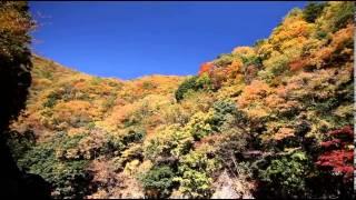 道志村観光PV