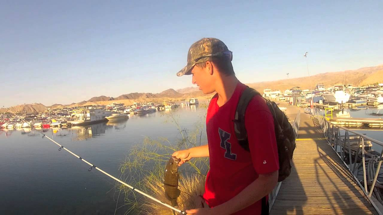 for Lake mohave fishing report