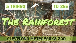 The Rainforest at the Cleveland Metroparks Zoo - 5 animals to see!