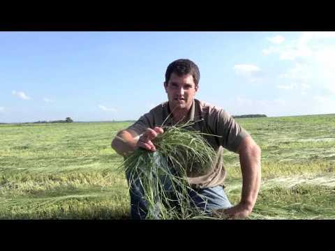 Millborn's Teff Grass Field