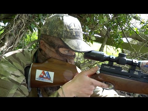 The Airgun Show – pigeon control over decoys PLUS the MTC Rapier rangefinder on test