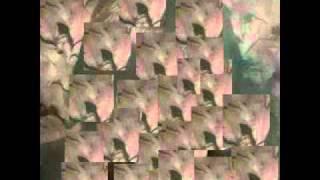 Watch Tom Verlaine Always video
