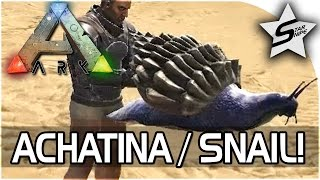 "ARK NEW ACHATINA TAME! - ""CEMENTING PASTE SNAIL!"" - ARK Survival Evolved Update Gameplay"