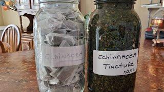 PREPARING HERBAL MEDICINES: ECHINACEA
