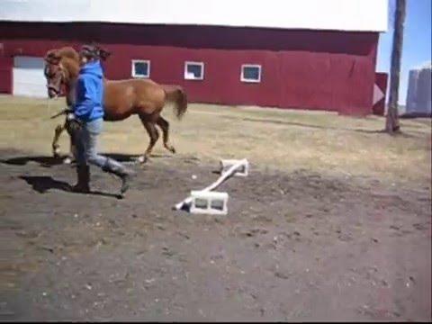 vidéo de nos chevaux(toutes les filles)