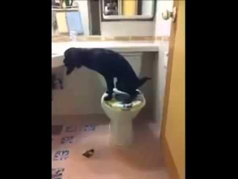 культурная собака