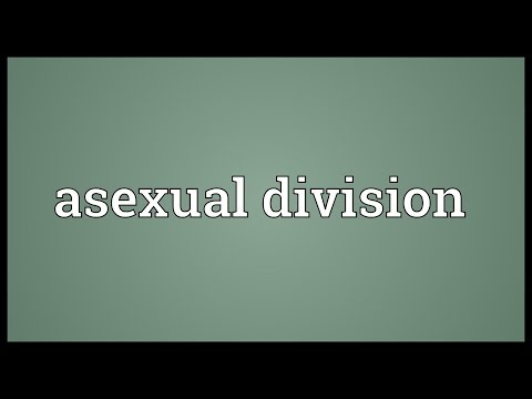Header of Asexual Division