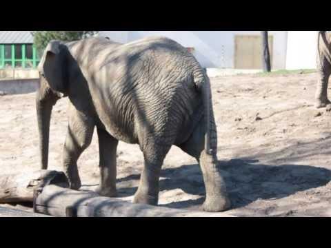 JAKIE TO ZWIERZĘ? - Borys W Zoo - Filmik Edukacyjny Dla Dzieci