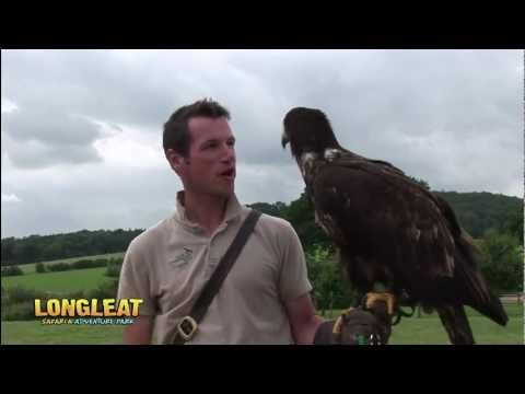 Hunters of the Sky Bird of Prey Display