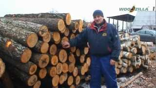 Exports of alder round wood logs from Ukraine | WOODZILLA Ltd