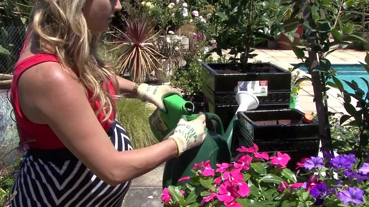 how to grow azaleas from cuttings video