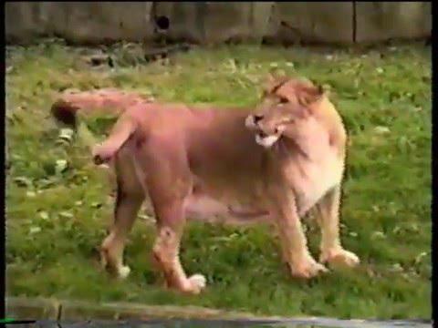 Hayvanlar Alemi Komik Video 2016