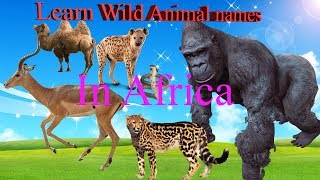Superman Learn Wild animal names in Africa | Learn Wild animal names & Sound in Africa Part 1